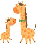 The giraffe and her calf