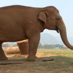 elephant and the dog story
