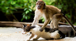 the cat and a monkey