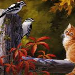 cat and the birds