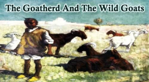the goatherd and wild goats