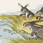 the hare and the frog
