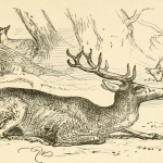 the sick stag