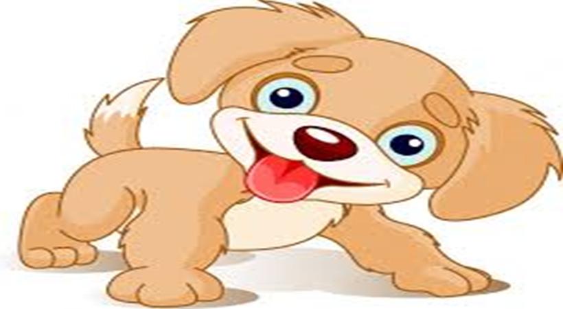 sambo puppy